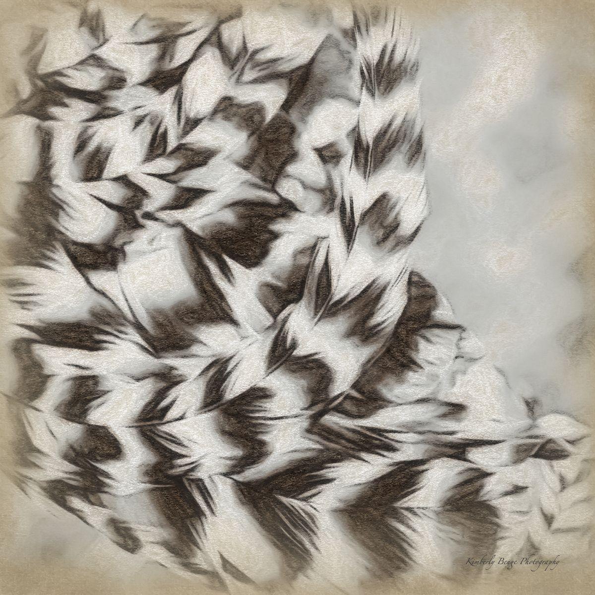 Thunder Feathers II