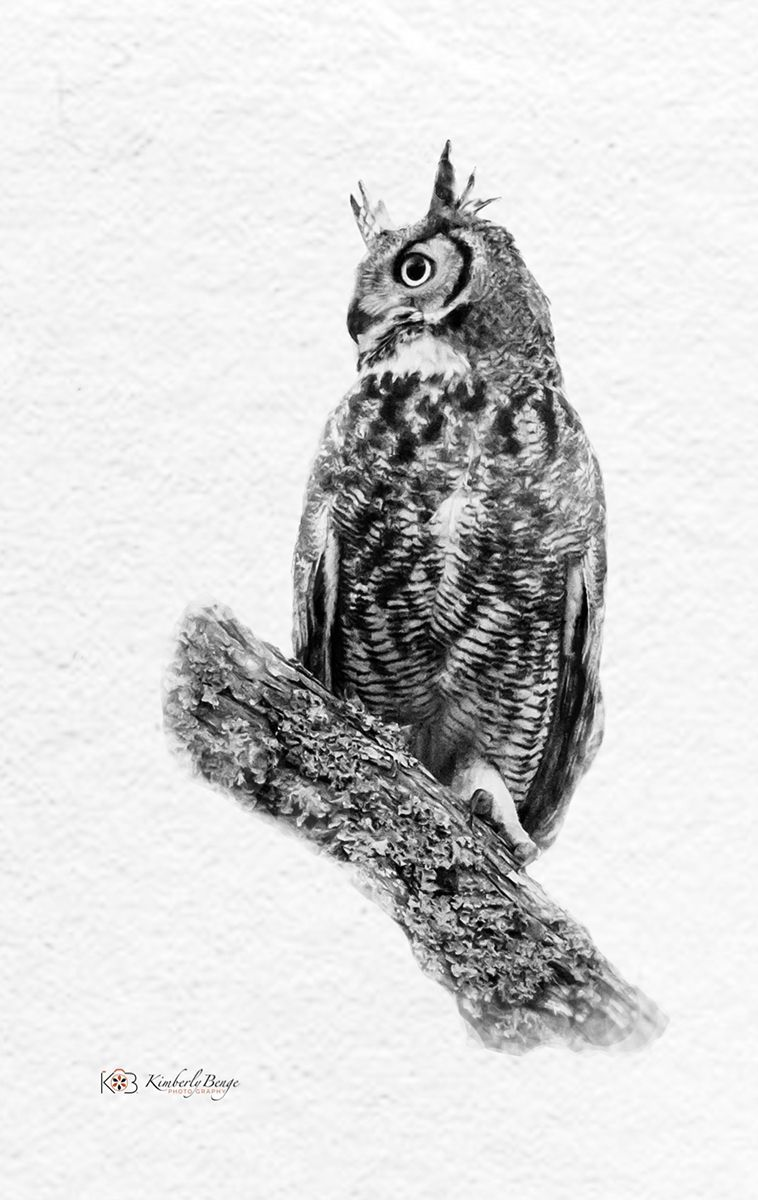 Mr. Hoot Owl